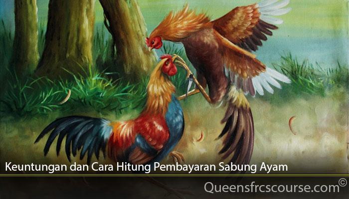 Keuntungan dan Cara Hitung Pembayaran Sabung Ayam