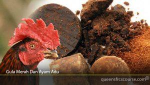 Gula Merah Dan Ayam Adu
